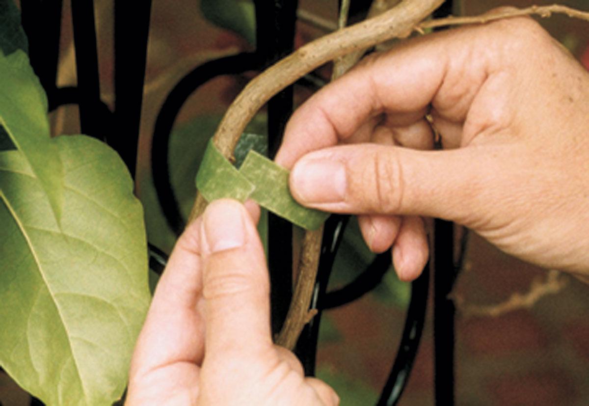Velcro Plant Ties | Garden Artisans, LLC