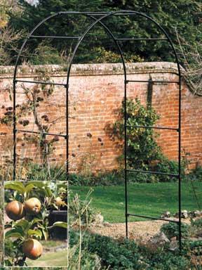 Fruit Tree Arch   Steel Garden Arch