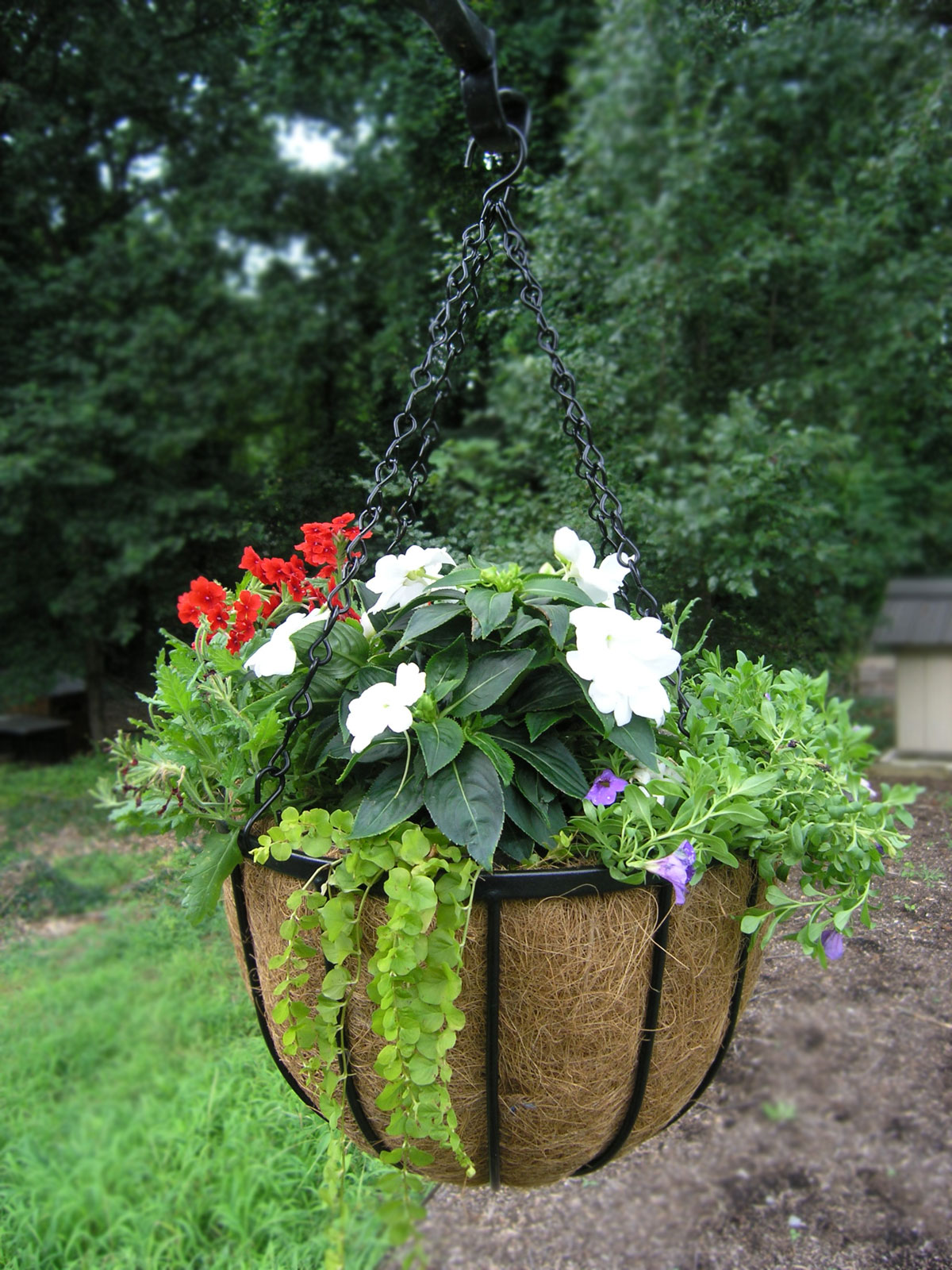 Bellus Large Hanging Baskets 14 Quot And 22 Quot Extra Deep