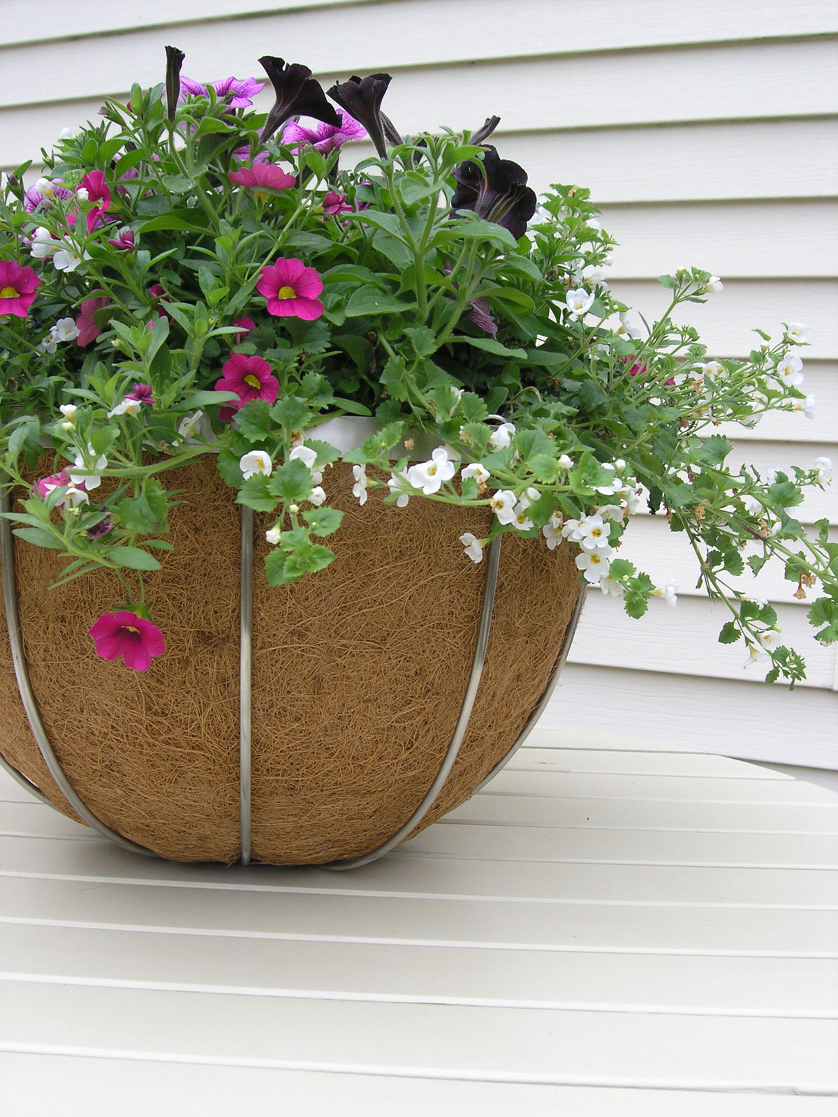 Stainless Steel 17 Hanging Basket With Molded Coco Liner
