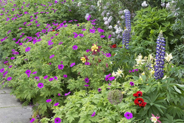 Designing Your Annual and Perrenial Border
