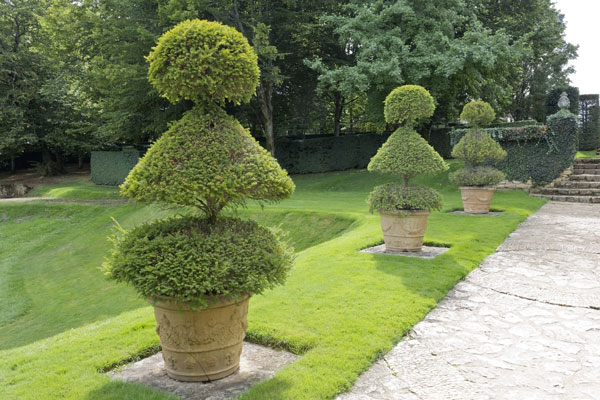 All About Topiaries