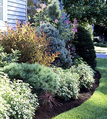 Evergreen Foundation Plants - backbone of the home landscape