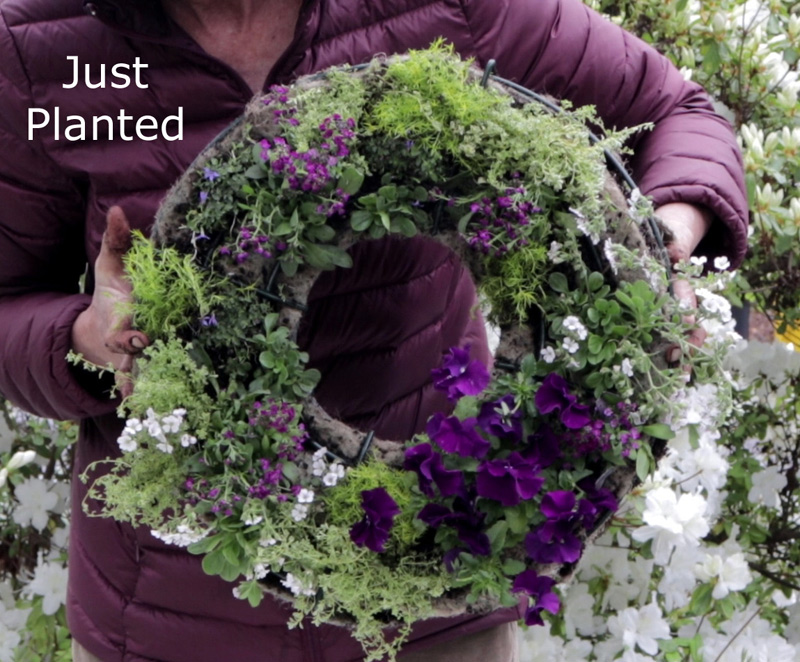 Creating a Living Wreath