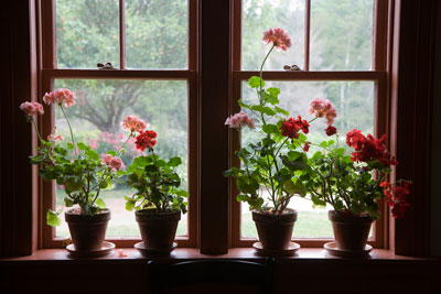 Transitioning plants from outdoor spaces to indoor spaces