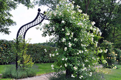 Using Arches, Gazebos, Pergolas & Rose Pillars in your Landscape