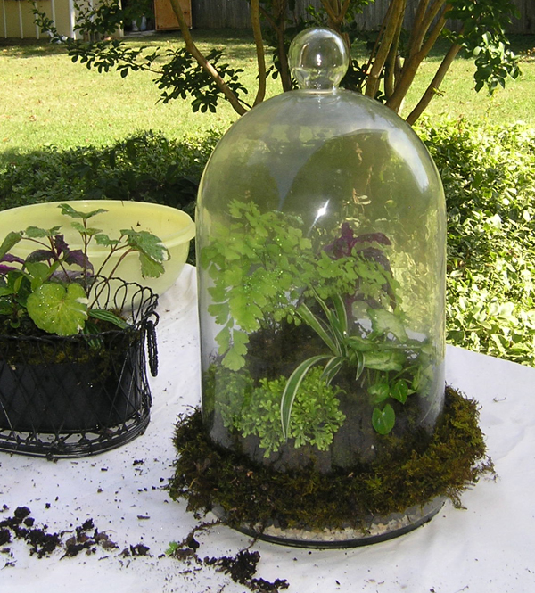 Terrariums - open or closed?