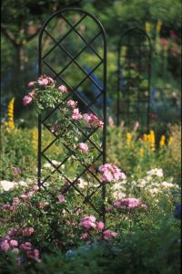 A classic black steel trellis can help hide ugly yard pipes or electric boxes and screen unsightly views