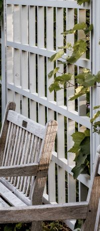 Vines grown on a trellis can hide unsightly garden views