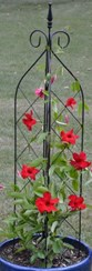 Plant a trellised vine in a pot to disguise electric boxes without permanently restricting access