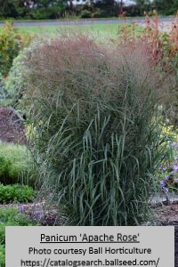 Ornamental grasses do a good job of hiding ugly yard and cable or electric boxes