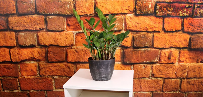 Best Low-Maintenance Houseplants