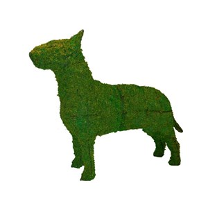 Mossed Bull Terrier Topiary Frame