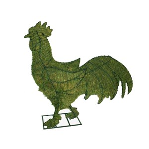 Mossed Rooster Topiary Frame
