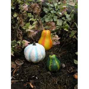 Miniature Gourds - Set of 3