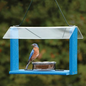 Blue Bird Feeder