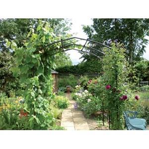 Vine Arch   Deep Steel Garden Arch