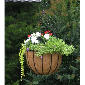 "14"" Bellus Hanging Basket Planted"