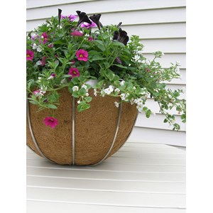 "17"" Stainless Steel Hanging Basket used without hanging chain"
