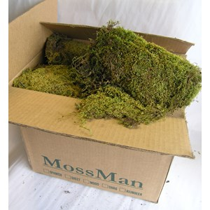 Floral Sheet Moss in Box