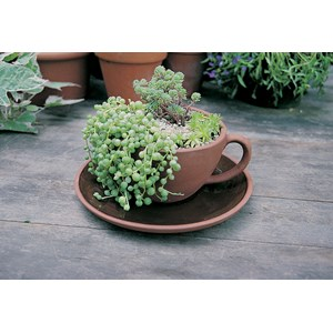 Terracotta Teacup & Saucer Planter