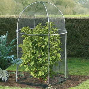 Domed Fruit Cage with Netting