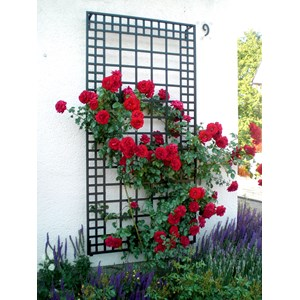 "3'3"" Wide Wall Trellis - steel powder coated black"