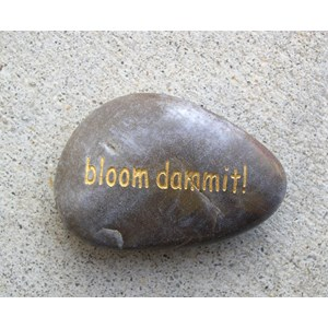 Bloom dammit! word stone