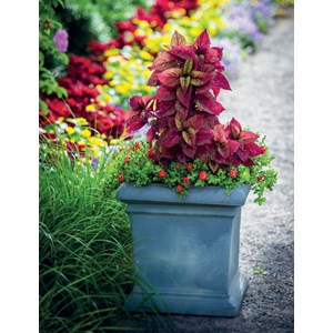 Dorchester Square Planter - Weathered Greystone