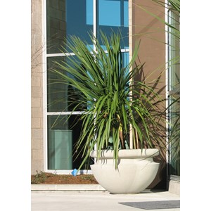 Orchard Planter - cast stone round planters