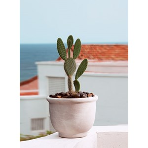 Crescent Agave lightweight resin planter