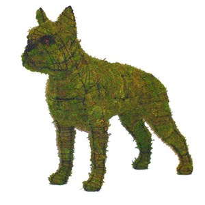 Mossed Boston Terrier Topiary Frame
