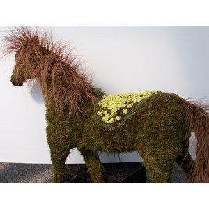 Planted Horse Topiary Frame