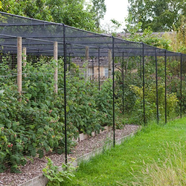 Fruit Cage Exterior Shot