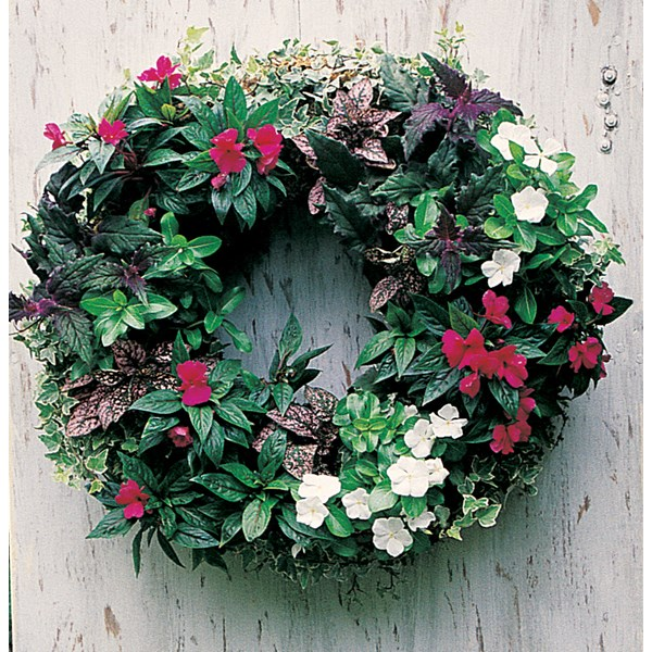 Planted Living Wreath