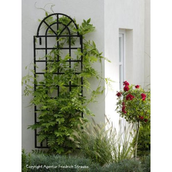 Arch Top Wall Trellis - Orangerie Classic Garden Elements