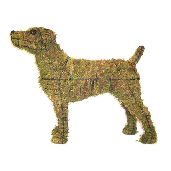Mossed Jack Russell Terrier Topiary Frame
