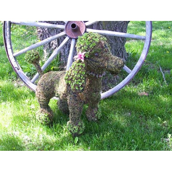 Planted Poodle Topiary Frame
