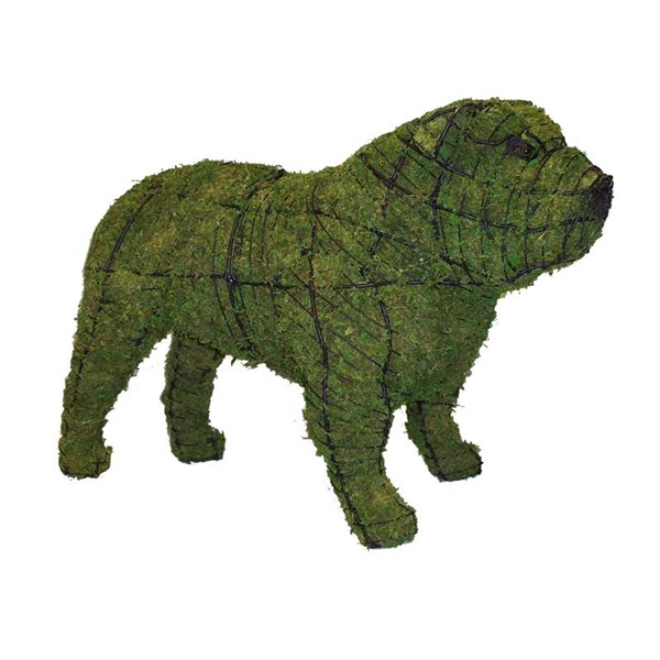 Mossed Bull Dog Topiary Frame